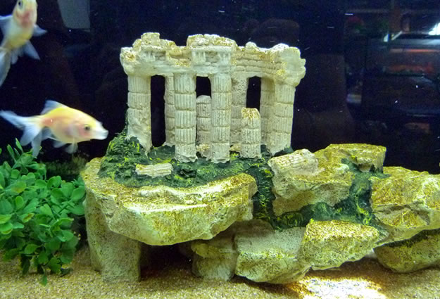 Decorazioni acquario