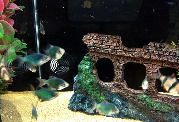 negozio di vendita acquari a Piossasco (TO)