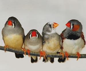 negozio di vendita uccelli a Piossasco (TO)