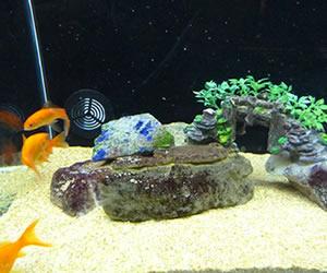 vendita pesci rossi torino d 39 acqua fredda e da laghetto