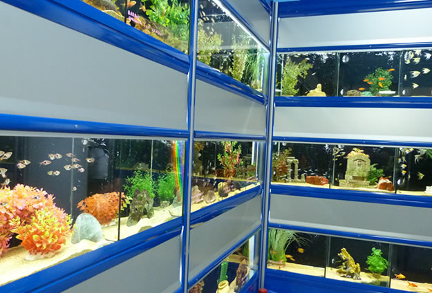 Pesci e piante per acquari in vendita a Torino
