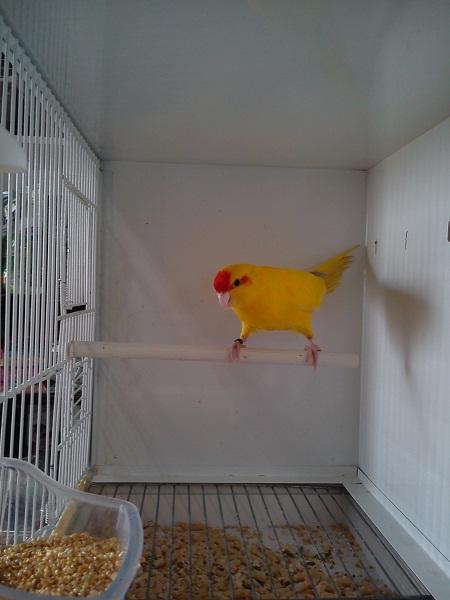 negozio di vendita uccelli addomesticati a Piossasco (TO)